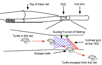 Side view showing a turtle excluder device fitted to a trawl net