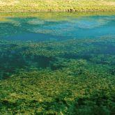 Eurasian water milfoil infestation