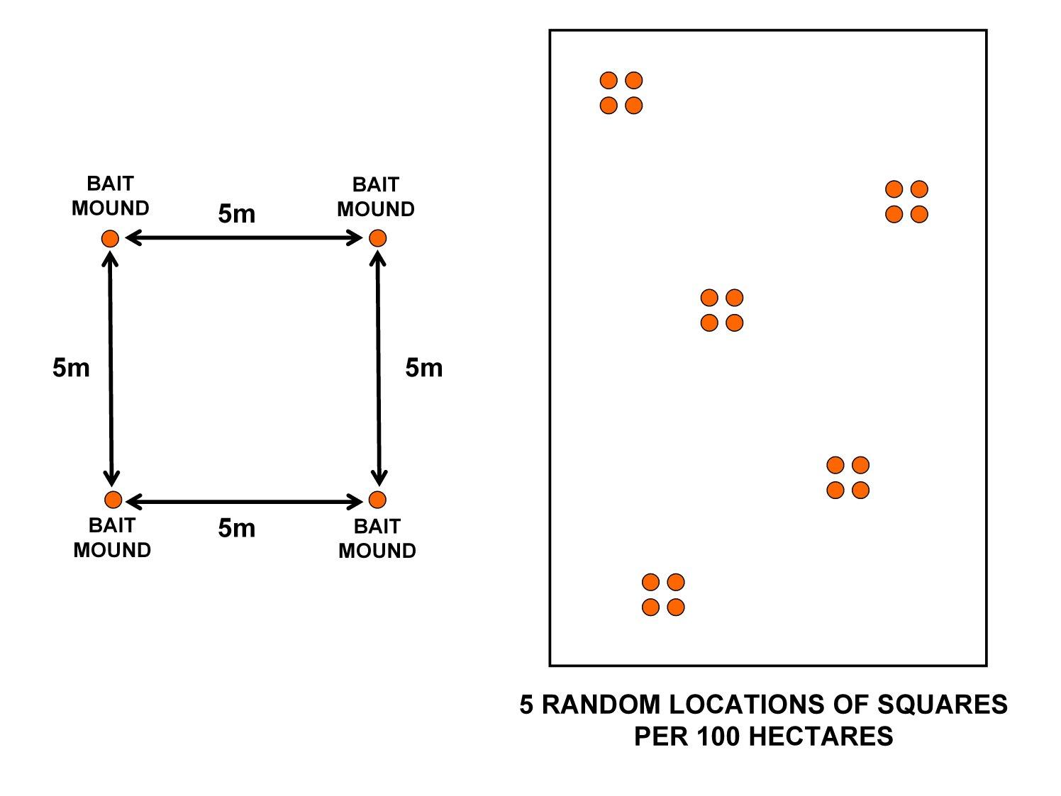 Diagrama de un cuadrado con 5 metros de lados y una estación de cebo en cada esquina.  Esto se repite al azar 5 veces dentro de un campo de 100 hectáreas.