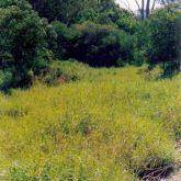 Para grass infestation
