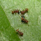 Electric ants on vegetation